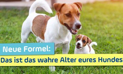 Martin Rutter Live Bei Antenne Bayern Die Antworten Zum Nachhoren In 2020 Antenne Bayern Hunde Haustiere