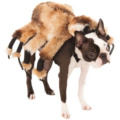 Giant Spider Dog Costume In 2020 Dog Spider Costume Spider Dog