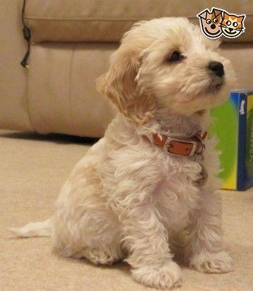 Gemischte Frisuren Frisuren Gemischte Hunde Susse Tiere Terrier Hund