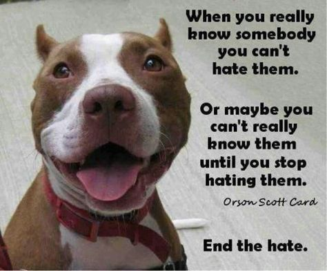 Pin By Deborah Trowbridge On Pitbull Worship Dog Friends