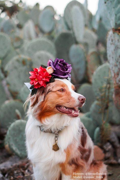 Australian Shepherd in a Flower Crown