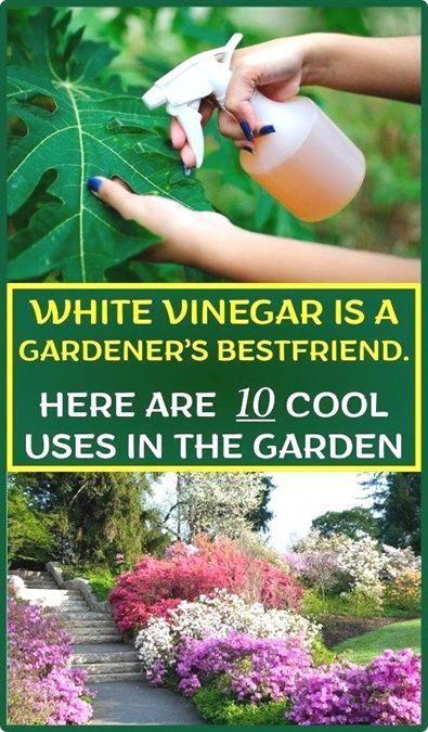 631d79fd0ccbb2b1aeea5f12325b72e3 - How To Be A Gardener Bbc