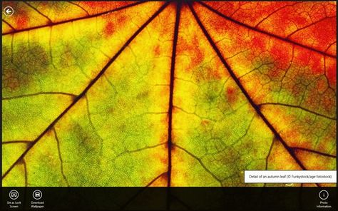 Bing Wallpaper Viewer Windows 8 Apps Games On