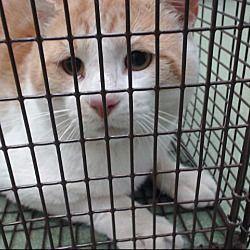 Saving Shelter Pets Inland Empire In San Bernardino California In 2020