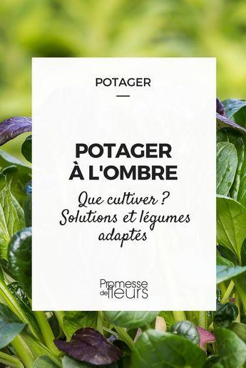 Potager A L Ombre Potager Jardin Potager Plantes De Patio