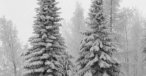 Liked on Pinterest: Real Christmas trees