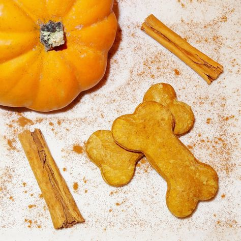 Pumpkin Cinnamon Dog Biscuits 12 ct by PawBites on Etsy