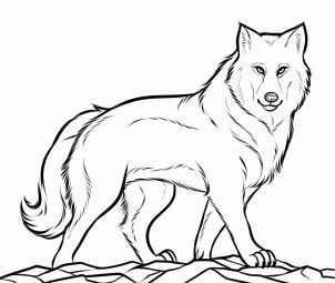 How To Draw A Gray Wolf Timber Wolf By Dawn Wolf Colors Animal