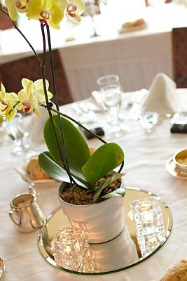 Orchid wedding centrepiece in terra cotta pot. No terra cotta, but like the mirror underneither....