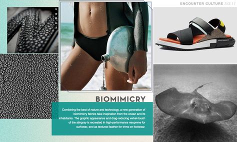 Biomimicry Encounter Culture