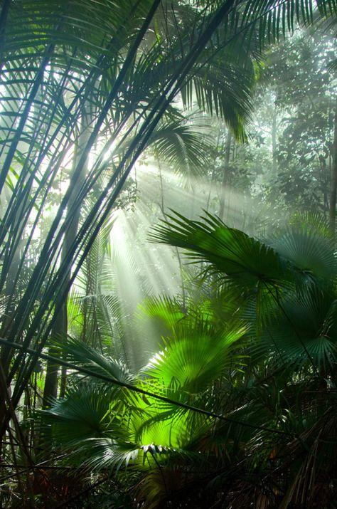 2020 Livistona endauensis (Fächerpalmen) – Gunung Janing Barat, Johor, Malaysia – Rose Gore Browne – Join in the world Beautiful World, Beautiful Places, Beautiful Forest, Jungles, Amazing Nature, Belle Photo, Mother Nature, Nature Nature, Nature Photography