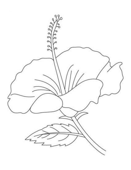 26 Gambar Bunga Sepatu Kartun Di 2020 Gambar Warna Bunga