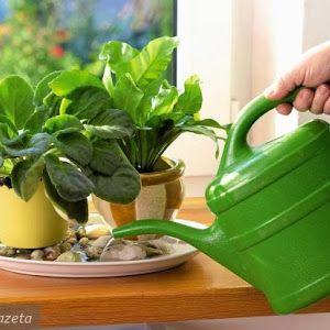 7 Kwiatow Domowe Sposoby Na Kwiaty Doniczkowe Canning Watering Watering Can