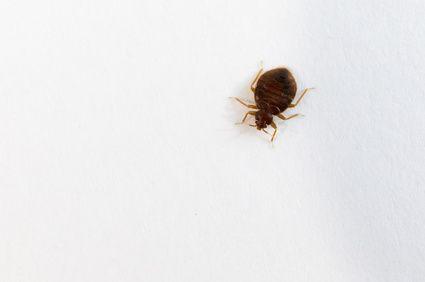 636f37600e135a1f39ff33f401a8929f - How To Get Bugs Out Of Your Room At Night