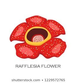 23 Lukisan Bunga Raflesia Arnoldi Malaysia Flowers Temaju Kepek Stockfotok Es Vektorkepek Download Index Of Pub Wikimedia Imag Lukisan Bunga Lukisan Bunga