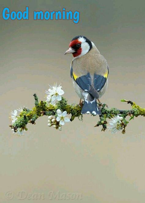 good morning mit bildern  exotische vögel vögel fotos