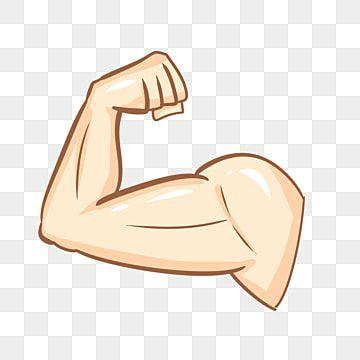 Musculos Del Brazo Clipart Muscular Rutina De Ejercicio Brazo Png Y Psd Para Descargar Gratis Pngtree In 2021 Arm Muscles Muscle Cartoon Styles