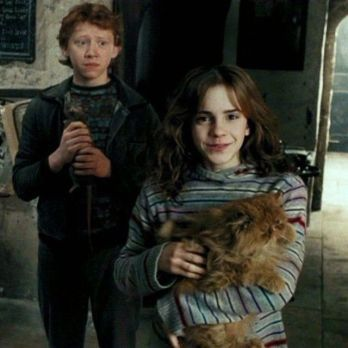 3 Thoughts On Harry Potter And The Prisoner Of Azkaban Part 2 Why Hermione Was Wrong In The Crookshanks Drama Harry Potter Hermione Harry Potter Movies Harry Potter Pictures