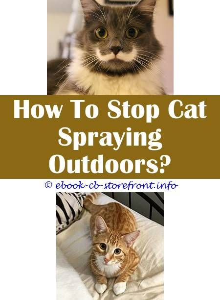 how to stop cats from peeing on outdoor plants