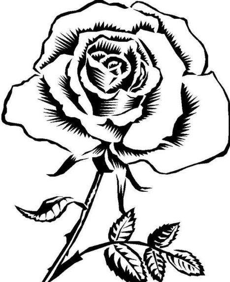 Sektsa Bunga Mawar Paling Cantik Sketsabunga Bungamawar Sketsa