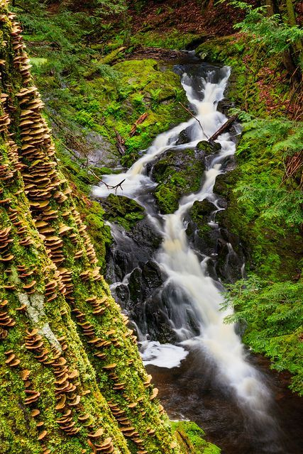 Beautiful Landscape Photography This Is A Cascading Waterfall Along The Union Mine Trail In Porcupine Mountains Beautiful Landscape Photography Michigan Waterfalls Waterfall