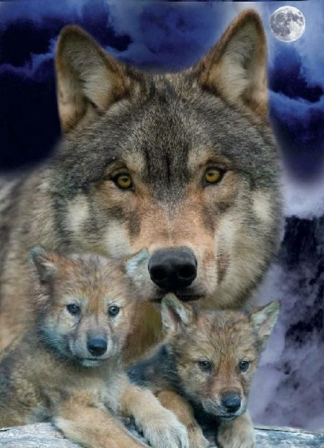 Hooooo trop mignon et si beau ♥ That's why it caused me so many health problems. X this is a container xq I am the wolf. Wolf Photos, Wolf Pictures, Animal Pictures, Beautiful Wolves, Animals Beautiful, Beautiful Family, Nature Animals, Animals And Pets, Strange Animals