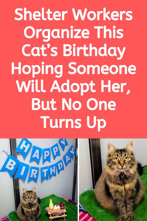 Shelter Workers Organize This Cat S Birthday Hoping Someone Will Adopt Her But No One Turns Up In 2020 Selfie Fail Best Funny Pictures Weird Facts