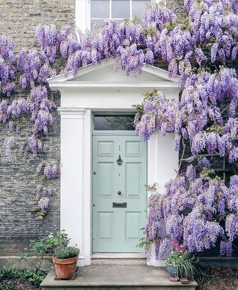 Is Millennial Pink Out? 5 Fresh Pastel Paint Color Ideas A duck egg blue door is complemented by an abundance of wisteria surrounding the front entrance of this house in London's Haggerston neighborhood. Front Door Paint Colors, Painted Front Doors, Paint Colours, Duck Egg Blue Door, Robin Egg Blue, Entrance Doors, Garage Doors, Doorway, Door Entryway