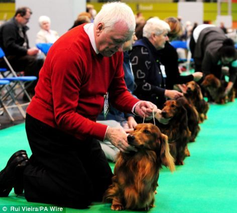 Meeoow We Like The Cat Suit But Isn T This A Dog Show Classy