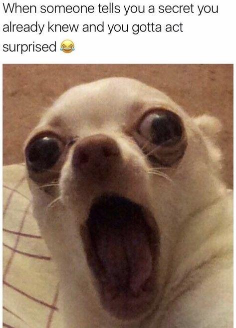 19 Dog Memes Because We Love Those Dumb Floofers