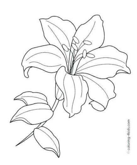 Drawing Flowers Bouquet Coloring Books 28 Ideas Lilies Drawing Flower Line Drawings Flower Coloring Pages