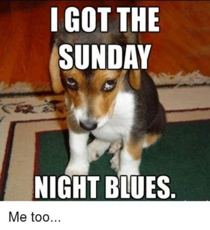 Sunday Night Is Here Again Funny Quotes Work Humor Workplace Humor