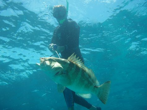 ascension island spearfishing spearfishing rare marbled grouper bahamas fishing video reel
