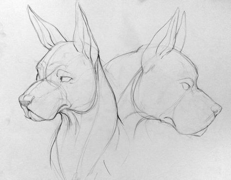 gesture drawings and studies from my animal. Dark Art Drawings, Pencil Art Drawings, Art Drawings Sketches, Cute Drawings, Realistic Drawings, Animal Sketches, Animal Drawings, Dog Anatomy, Arte Sketchbook