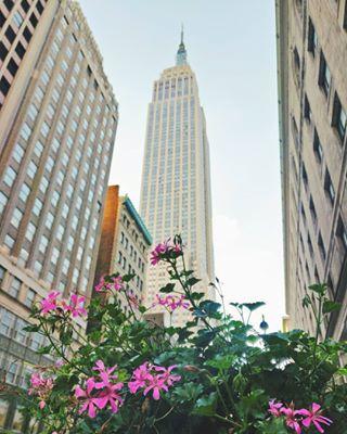 Diccionario De Nueva York 20 Palabras Típicas Para Tu Viaje Nueva York Viaje A Nueva York Anuevayork