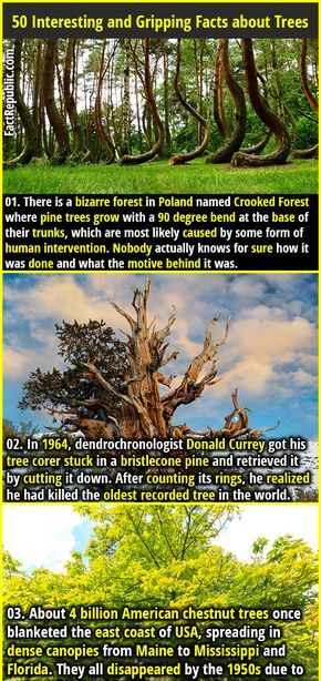50 Interesting And Gripping Facts About Trees Fact Republic Crooked Forest Weird Facts Walking In Nature