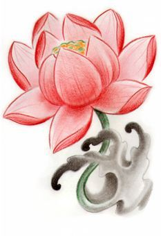 Delicate Lotus Deco Drawing Sketch Google Search Water Lily Tattoos Flower Sketches Lily Tattoo
