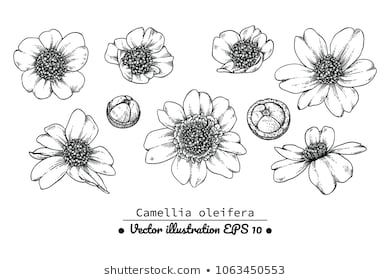 Similar Images Stock Photos Vectors Of Drawing Anemone Flowers Illustration Vector Clipart 619695716 Shu In 2020 Flower Illustration Flower Drawing Illustration