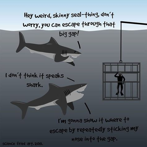 Sharks are nice, guys. The ocean is salty with the tears of misunderstood sharks who just wanted to cuddle.