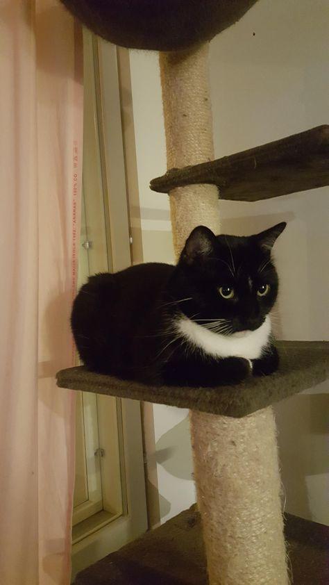 catloaf pinterest cat cat and cat