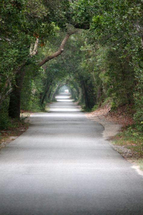 Bald Head Island, North Carolina ~ I want to ride down this lane in a horse drawn buggy