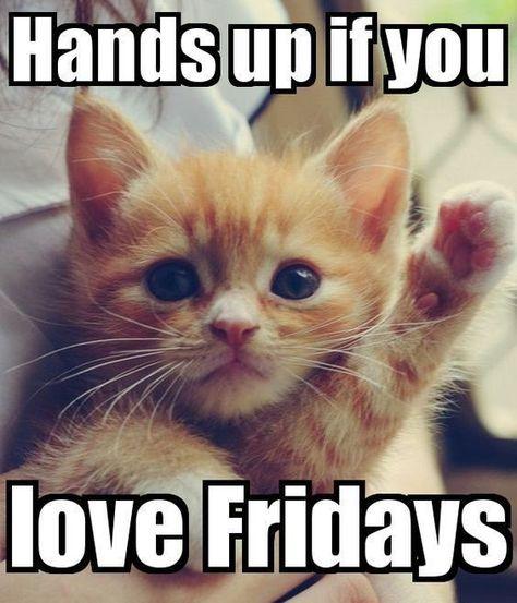 Hands Up if you love Fridays. #loveforFRIDAYquotes #fridayquotes #TGIF #missingfriday #dailyquotes #catmemes #therandomvibez