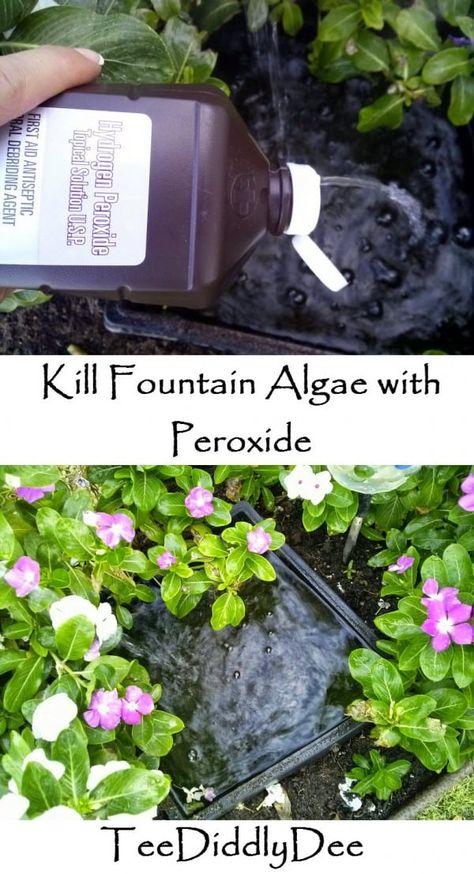 Kill Algae In Fountains With Peroxide Teediddlydee In 2020 Algae Outside Fountains Pond Algae