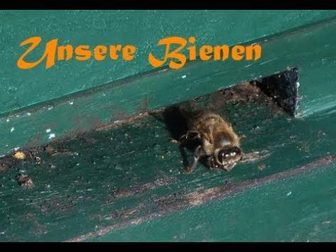 Bienen Beuten Auf Den Bucherskorpion Vorbereiten Varroabehandlung