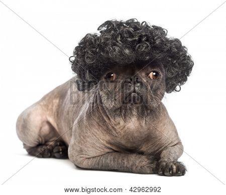 Hairless Mixed Breed Dog Mix Between A French Bulldog And A