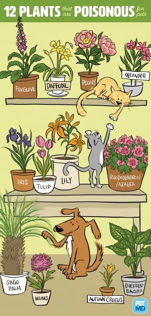Safe Flowers For The Garden With Cat Cat Plants Poisonous Plants Plants Poisonous To Dogs