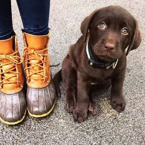 Awww. (Photo via Instagram: pupperthegreat) L.L.Bean Boots