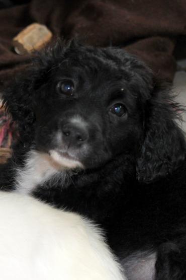 Hund Welpe Wuschelmix Mischling Rude 4 Monate In Filderstadt Baden Wurttemberg Hunde Lustige Hunde Haustier