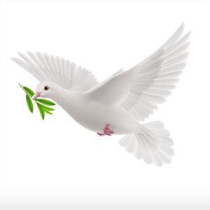 8ccee0fde4e54764688ddfe763724b9a Paloma De La Paz Fotos Del Espiritu Santo Arte De Aves