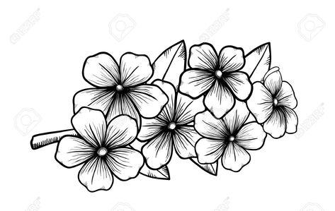 Dessin De Fleur En Noir Et Blanc Encre Tattoo Branche Dun